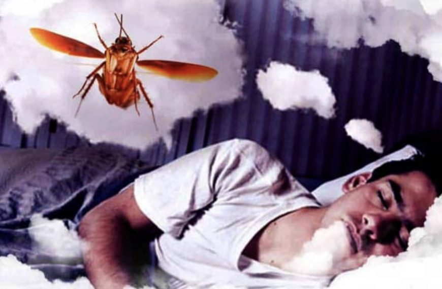 Dreaming Of Cockroaches – Sign of Good Luck or Not?
