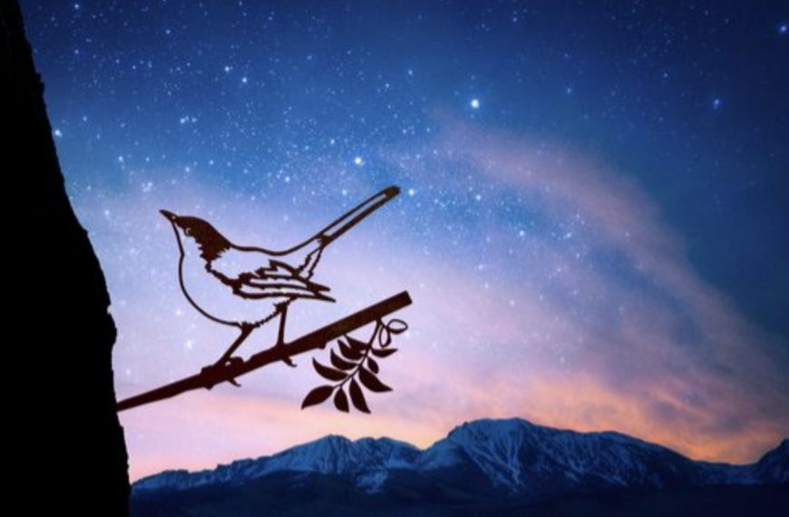 Dreaming of Birds – Symbols of Your Goals and Hopes