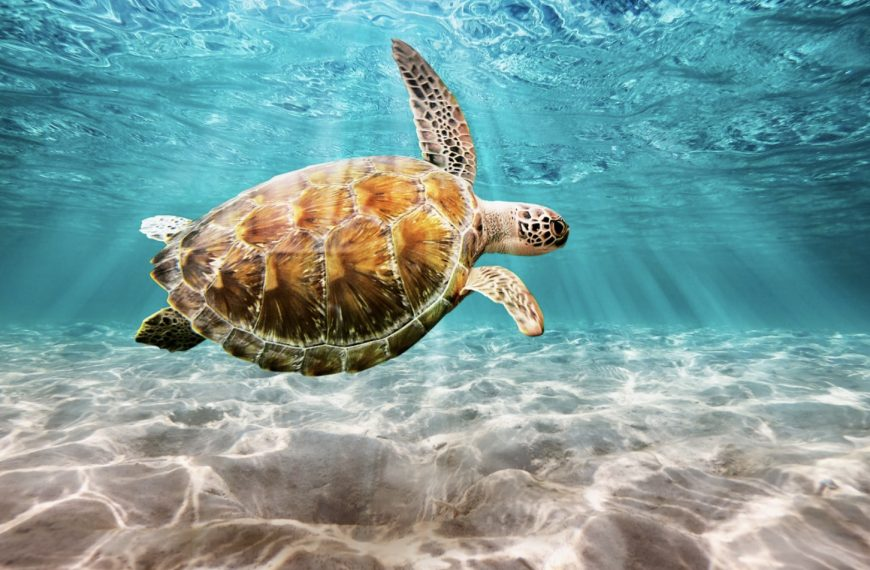 Dream About Turtles – Common Dream Meaning and Interpretations