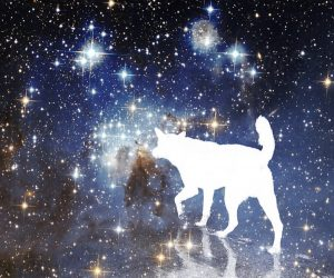 Dreaming of Dogs – Common Interpretations and Meanings